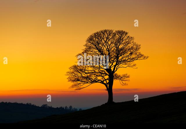 Ein Baum leeren Blätter im Winter bei Sonnenuntergang in der Kakerlaken in der Nähe von leek Staffordshire Stockbild