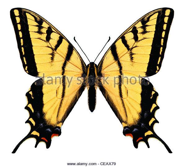 Schmetterling-Computerbild, Konzept, Rätsel Stockbild