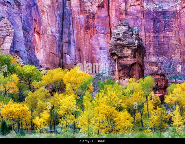 Die Kanzel und Herbst Farbe am Temple of Sinawava. Zion Nationalpark, Utah Stockbild