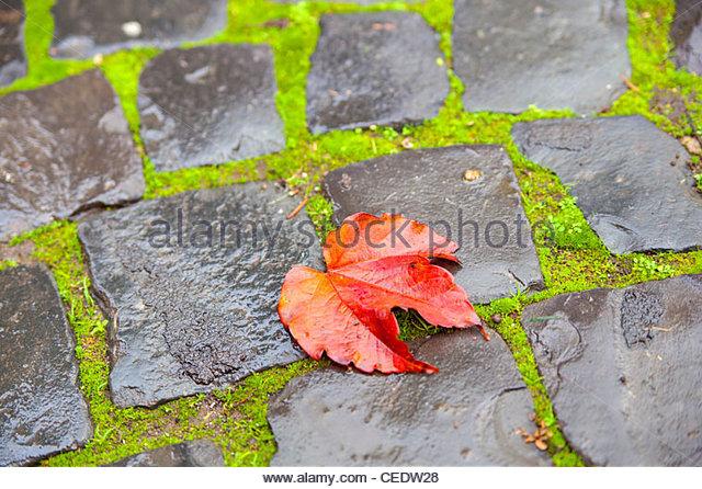 Rote Blatt auf grünem Moos und nassen Steinen Stockbild