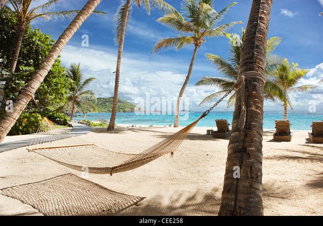 Palmen Strand Hängematte Stockbild