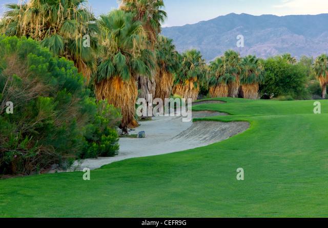 Landschaftsgestaltung rund um Wüste Weide Golfresort. Palm Desert, Kalifornien Stockbild