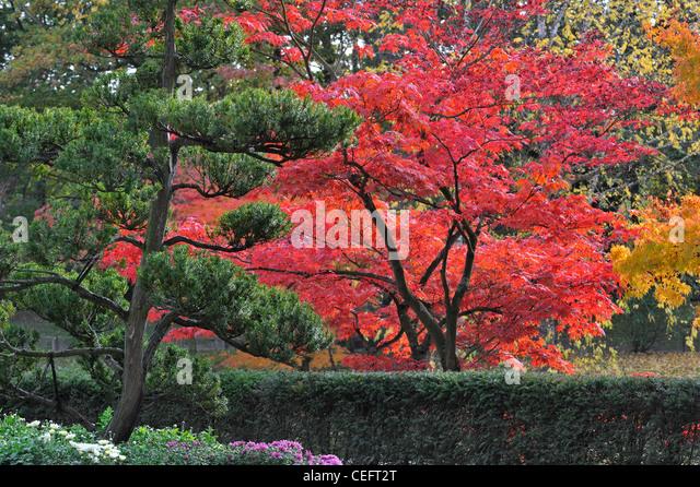 japanese garden autumn leaves stockfotos japanese garden. Black Bedroom Furniture Sets. Home Design Ideas