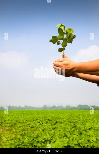 Hand des Bauern halten Bäumchen auf dem Bauernhof Stockbild