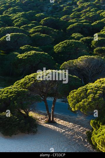 Punta Paloma Sanddünen; Tarifa Spanien Stockbild