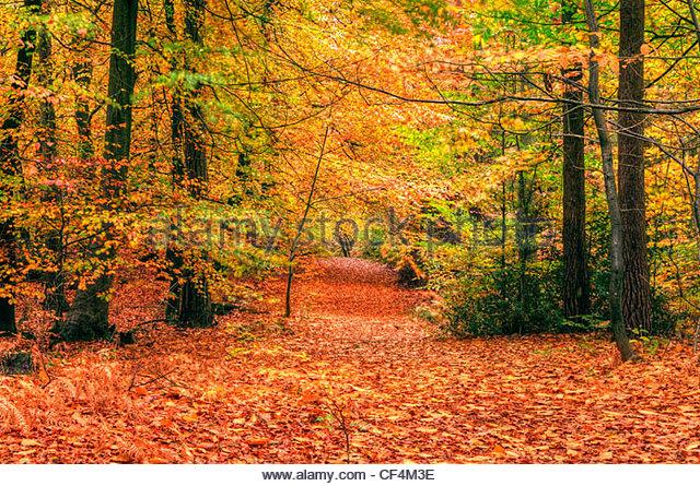 Intensiven Herbstfarben von Blättern im Wald. Stockbild