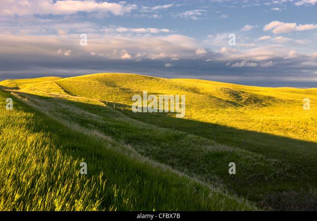 Felder im Frühling, Baildon, Saskatchewan, Kanada. Stockbild