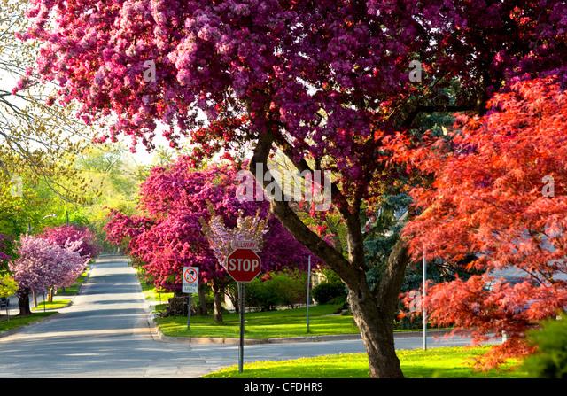 Straßenbild, Queenston, Ontario, Kanada Stockbild