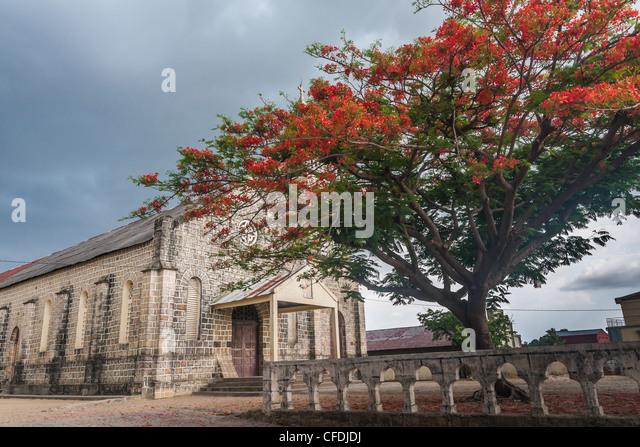 Delonis Regia (Flamboyant) vor der katholischen Kirche Ambilobe, Norden von Madagaskar Stockbild