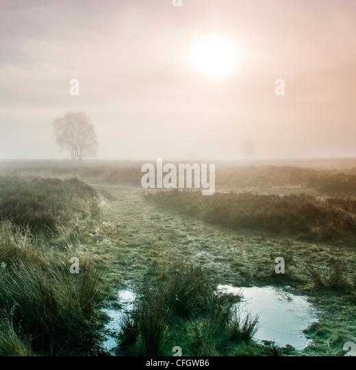 Sunrise Morgennebel auf Cannock Chase AONB (Gebiet von außergewöhnlicher natürlicher Schönheit) Stockbild