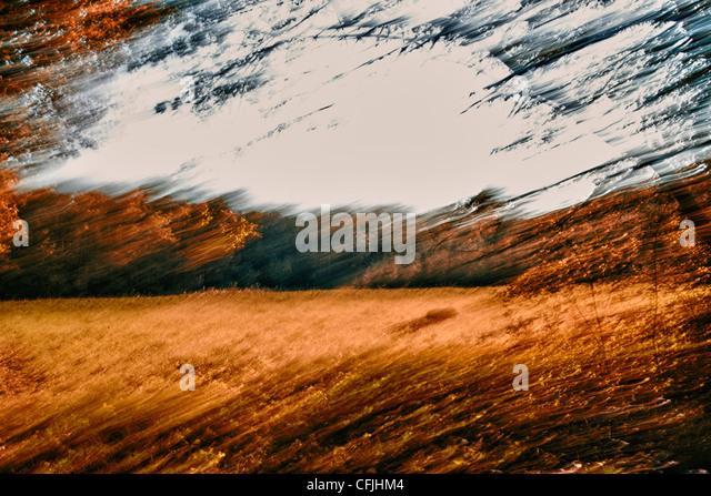 Verschwommenes Bild von Wald und Feld Stockbild