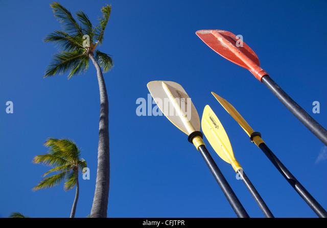 Palmen und Paddel, Bavaro Beach, Punta Cana, Dominikanische Republik, West Indies, Karibik, Mittelamerika Stockbild