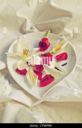 Blütenblätter auf einem weißen Teller Stockbild