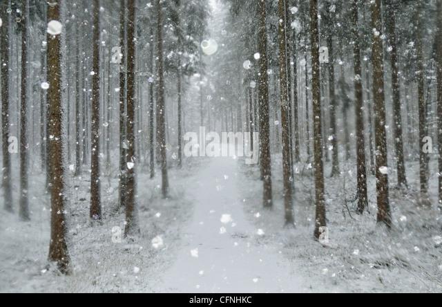Winterlandschaft, in der Nähe von Villingen Schwarzwald, Baden-Wurttemberg, Deutschland, Europa Stockbild