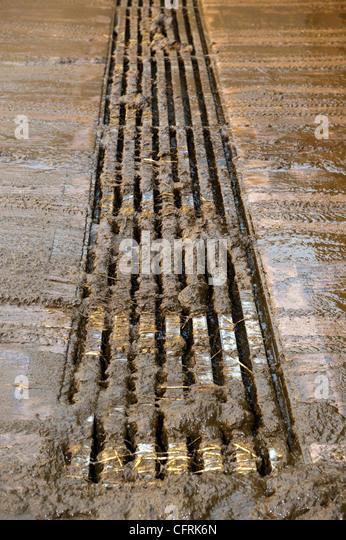 Sichtbeton-Lamellen im Viehhof Gülle in eine unterirdische Grube zu sammeln. Stockbild