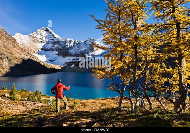 Wanderer mit Blick auf See McArthur und Mount Biddle, Yoho Nationalpark, Britisch-Kolumbien Stockbild