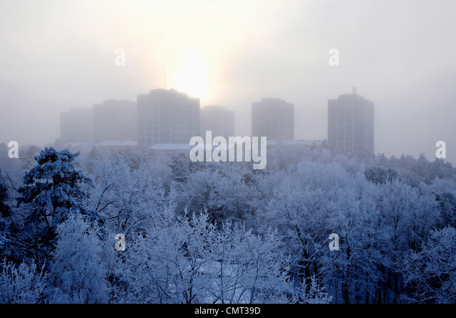 Bäume, die unter dem Schnee gegen Gebäude Stockbild