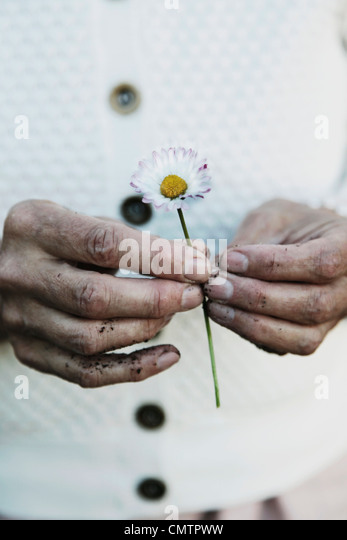 Zwei Hände, die eine Blume Stockbild