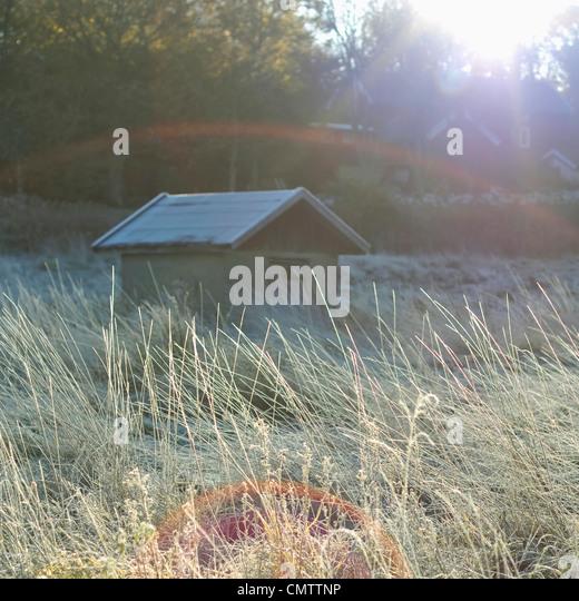 Frostigen Schuppen in der Herbstsonne Stockbild