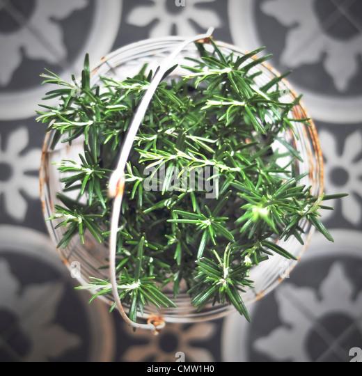 Nahaufnahme der grüne Kraut in Korb Stockbild