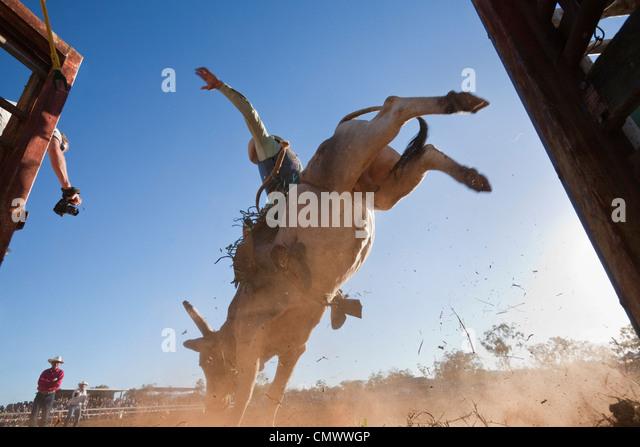 Niedrigen Winkel Ansicht von Bull Rider Arena betreten.  Mt-Granat Rodeo, Mt Granat, Queensland, Australien Stockbild