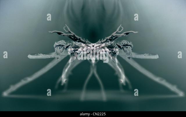 Röntgenbild einer Spinne Stockbild