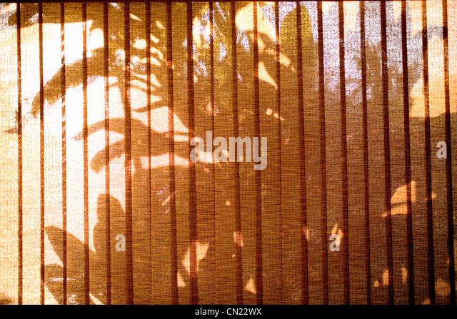 Palm-Baum Schatten gesehen durch Fenster-Vorhänge Stockbild