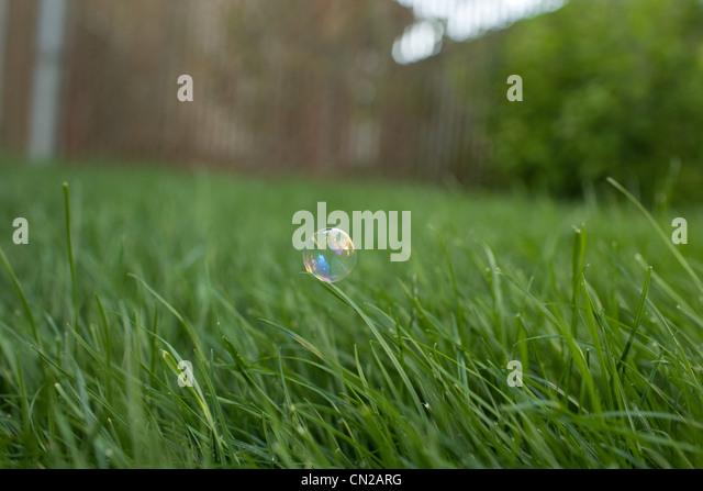 Blase auf dem Rasen Stockbild