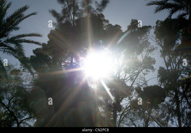 Bäume in der Sonne, niedrigen Winkel Ansicht Stockbild