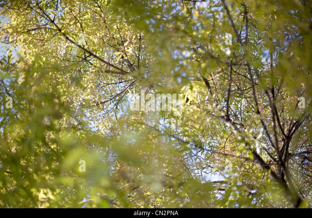 Bäume und Blätter, niedrigen Winkel Ansicht Stockbild
