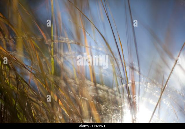 Grass abstrakt, Nahaufnahme Stockbild