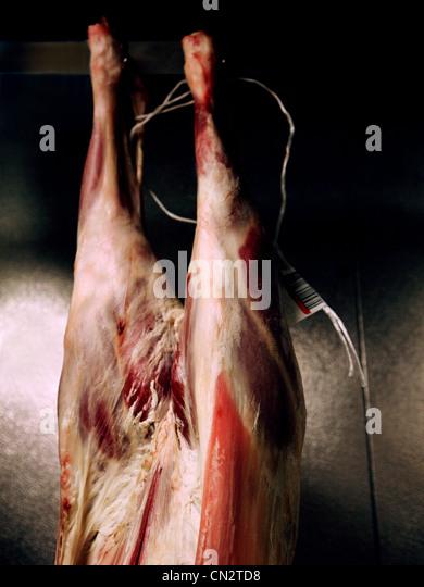Lamm Fleisch hängen Stockbild
