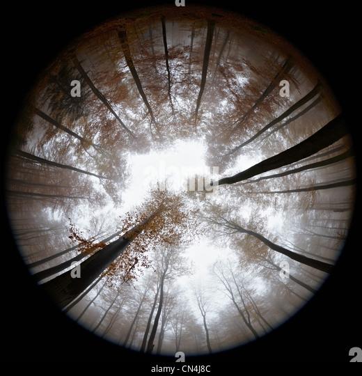 Fisheye Blick auf herbstlichen Wald im Nebel Stockbild