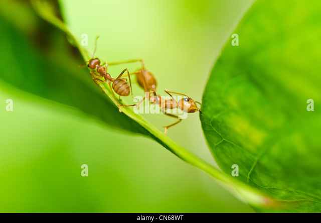 forest ant stockfotos forest ant bilder seite 3 alamy. Black Bedroom Furniture Sets. Home Design Ideas