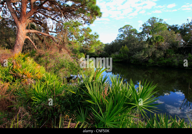South Creek im Oscar Scherer State Park in Florida USA Stockbild