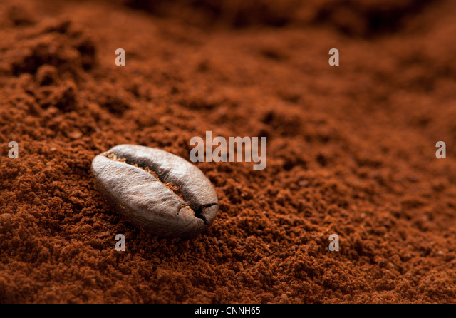 Eine einsame Kaffeebohne auf einem frischen Kaffeesatz Stockbild