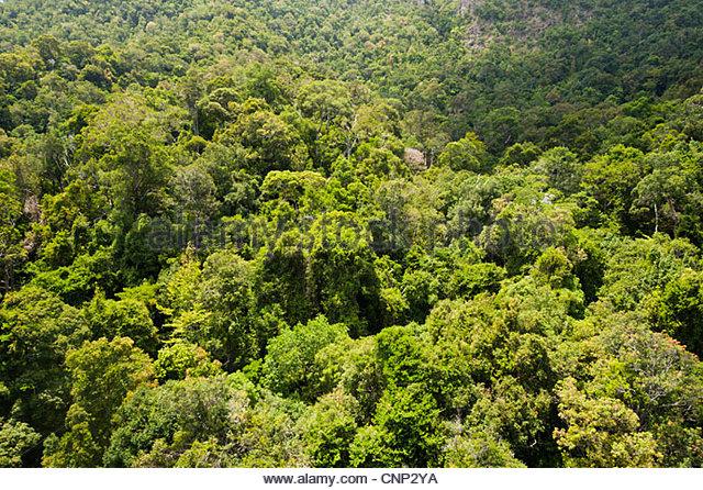 Regenwald, Langkawi, Malaysia Stockbild