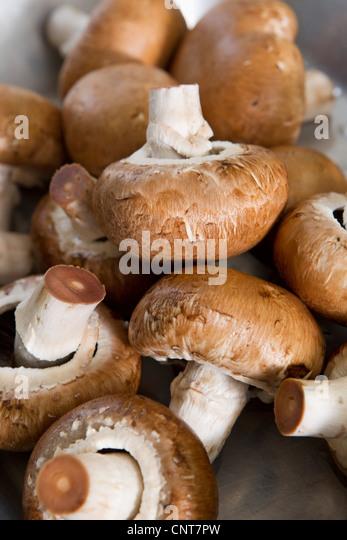 Haufen von Pilzen Stockbild