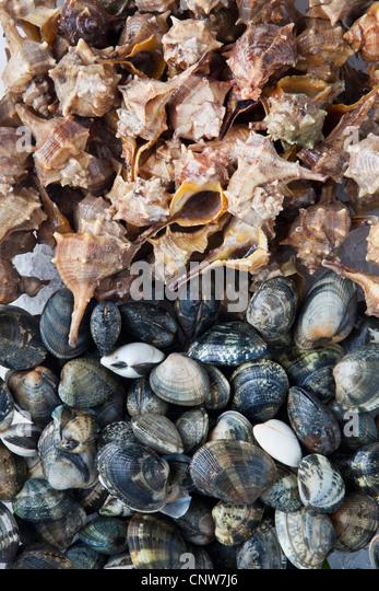 Haufen von Muscheln und Muscheln Stockbild