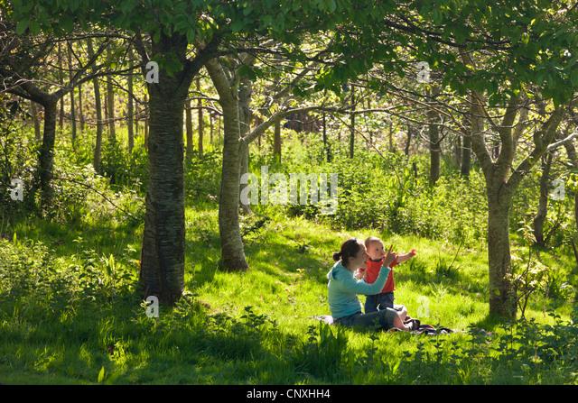 Junge Mutter und neugierige ein Kleinkind Einjahressohn in einem Waldgebiet, Cutteridge Wood, Devon, England. Frühling Stockbild