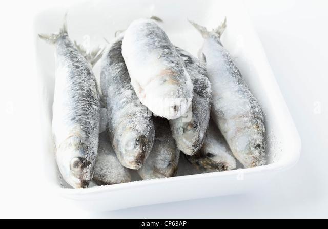 Sardinen in Schüssel auf weißem Hintergrund eingefroren Stockbild