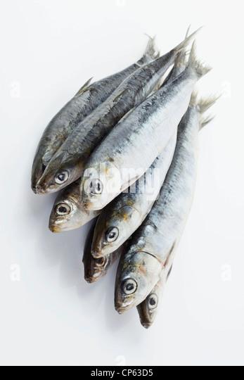 Sardinen auf weißem Hintergrund Stockbild