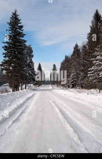 ein Pfad ist im Winterwald Stockbild