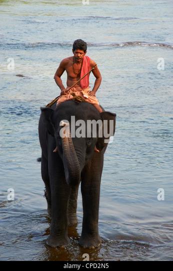Elefant-Ausbildungszentrum in Kodanad, Kerala, Indien, Asien Stockbild
