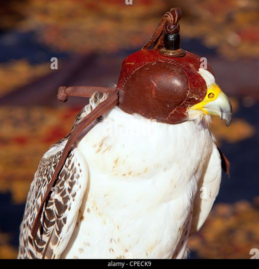 Vogel-Falke mit Falknerei blind Haube aus braunem Leder Stockbild