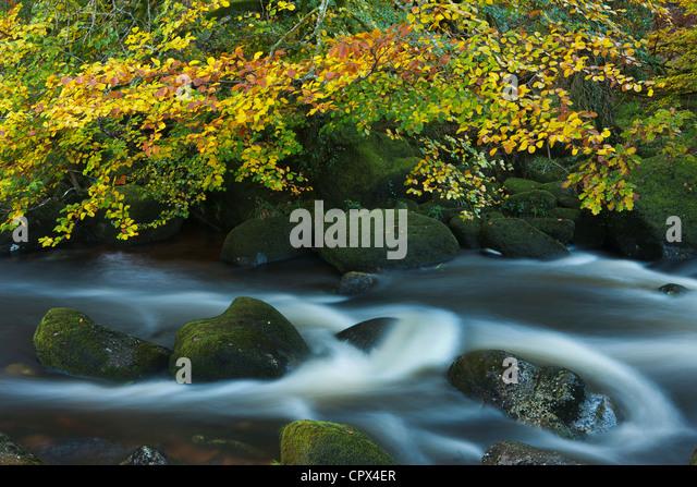 Herbst Farben entlang der East Dart River, Dartmoor, Devon, England, UK Stockbild