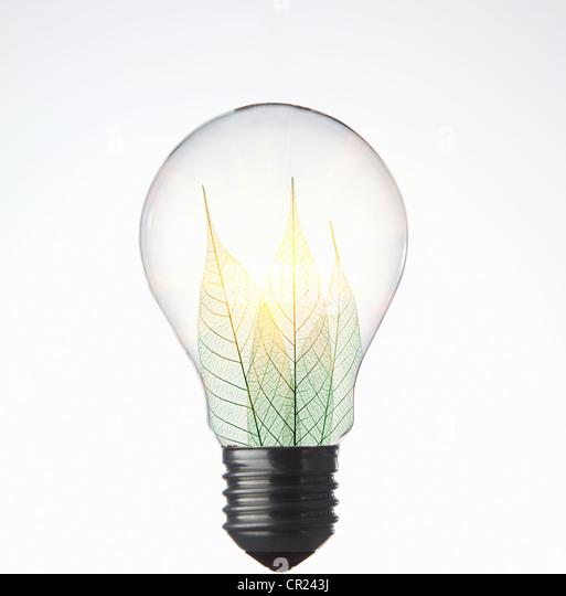 Blätter wachsen in Glühbirne Stockbild