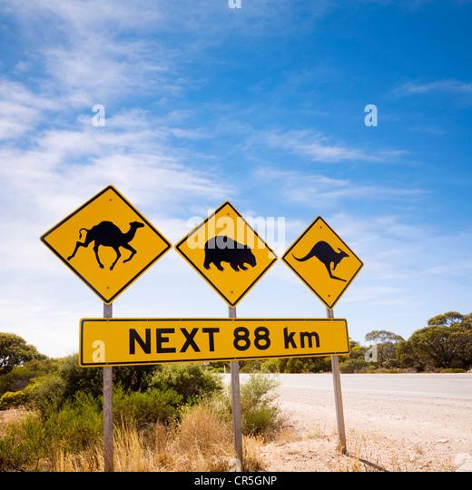Berühmte Schild auf die Nullarbor Plain, South Australia, achten Sie auf Kamele, Wombats und Kängurus. Stockbild