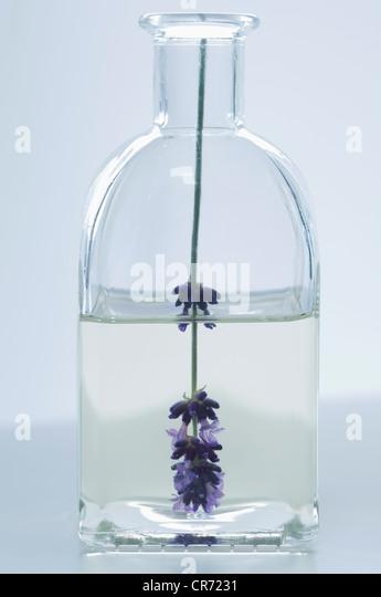 Lavendelöl in Flasche mit Blume, Nahaufnahme Stockbild