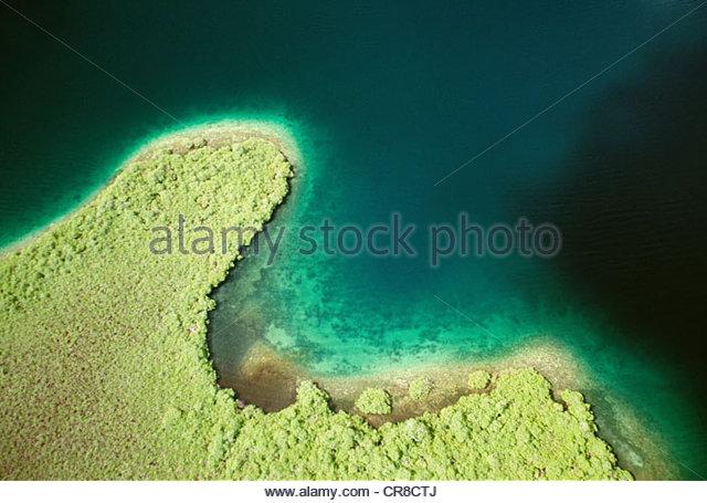 Mangroven, Bocas del Toro, Panama. Stockbild